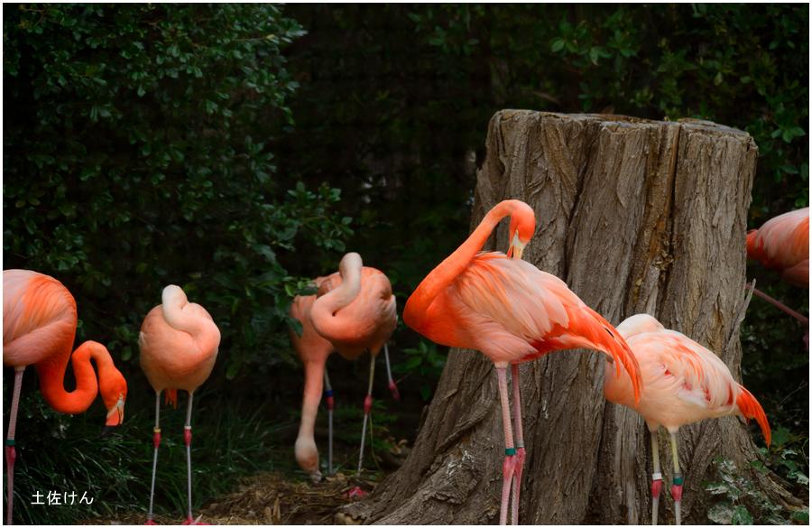 天王寺動物園3