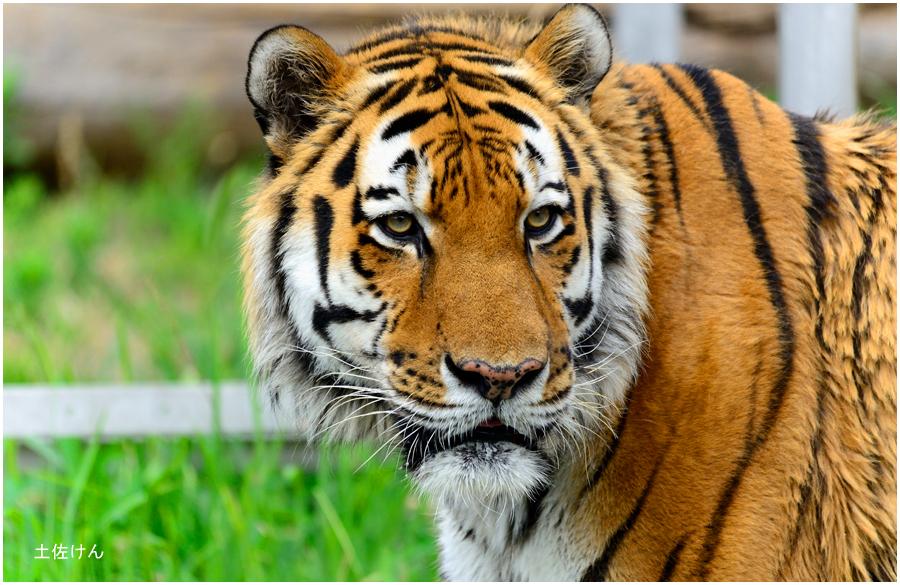 天王寺動物園1