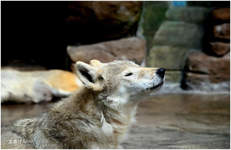 天王寺動物園2