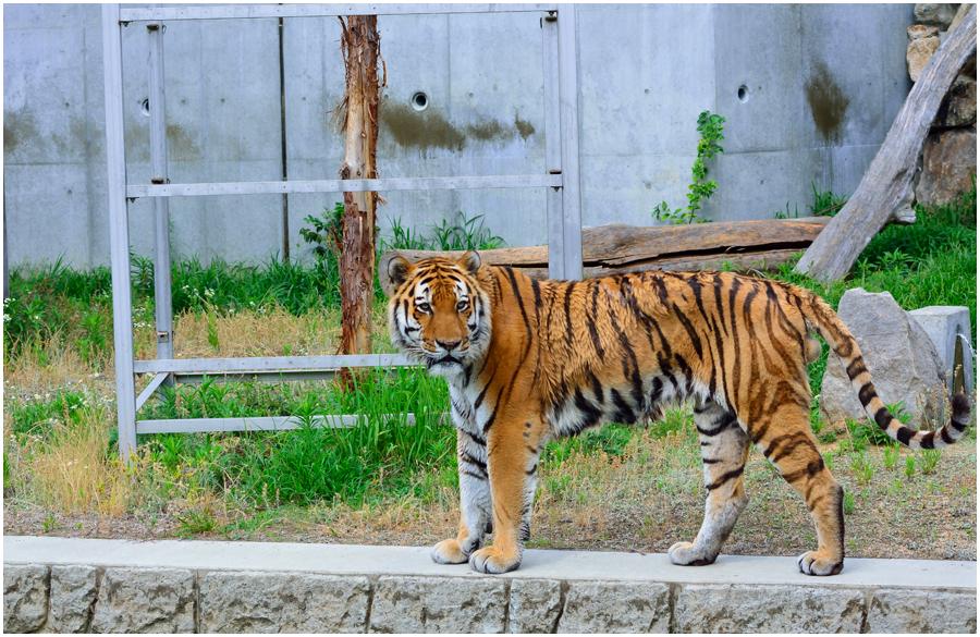 天王寺動物園・助手2