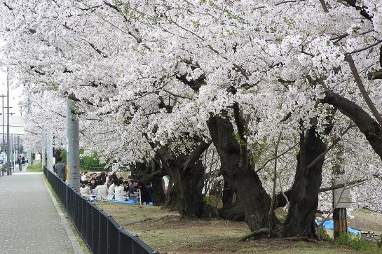 花見 豊田市