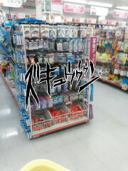 moblog_a4501606.jpg