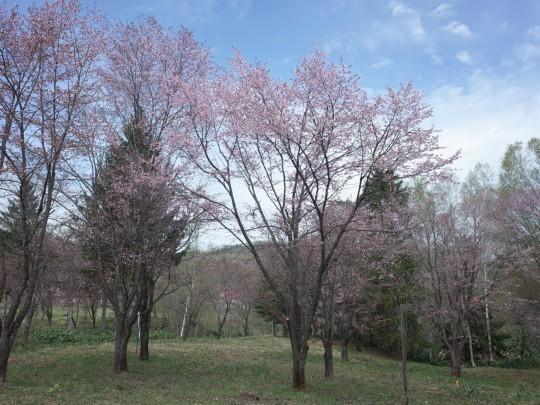 千本桜07