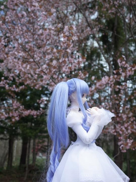 千本桜10