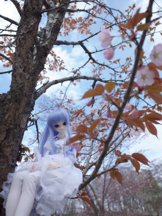 千本桜12