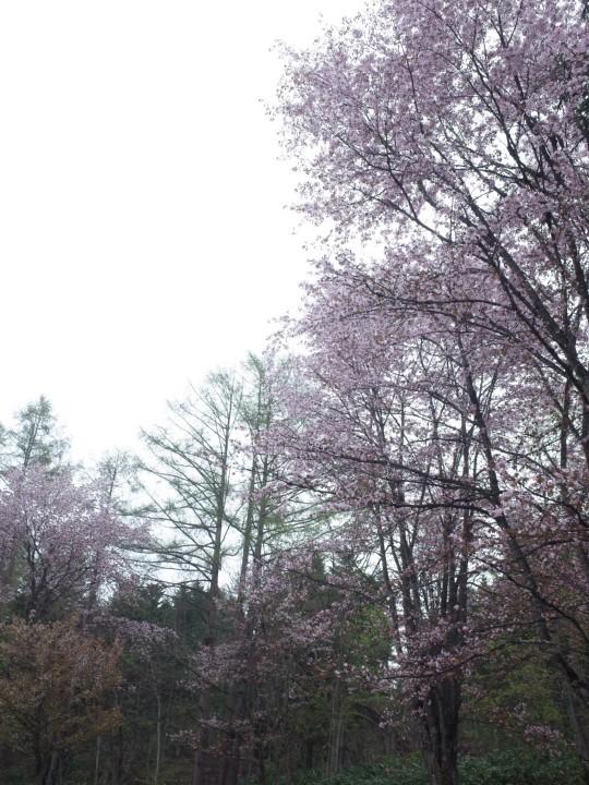 千本桜22