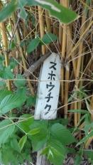 9:39 写真左のタワシ型のは、竹でした。