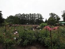 バラ見本園