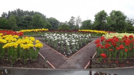世界の百合広場 中央花壇