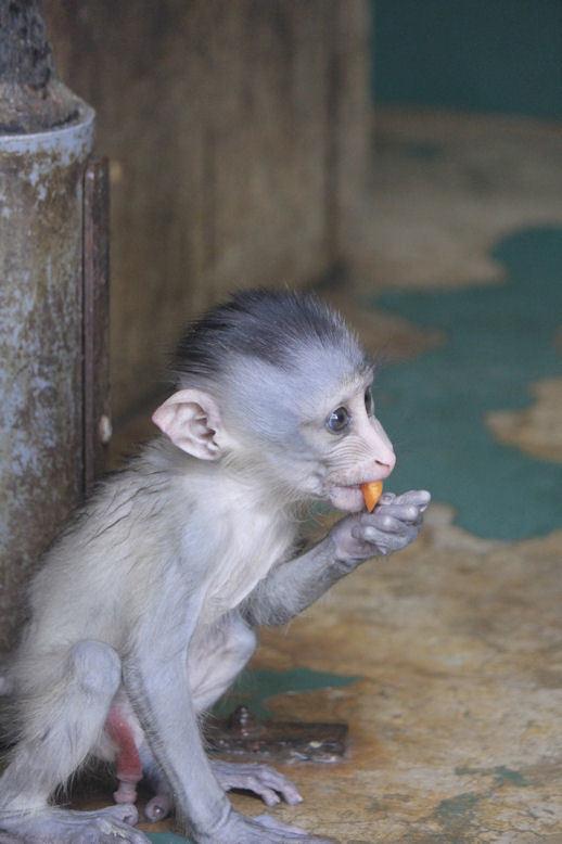 '17.8.10 baby mandrill 3002