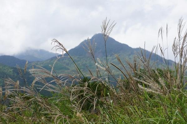 ススキの群生の隙間から烏帽子岳を望む