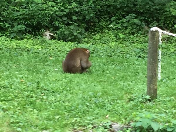 神庭の滝のもうひとつの名物?野生のサル