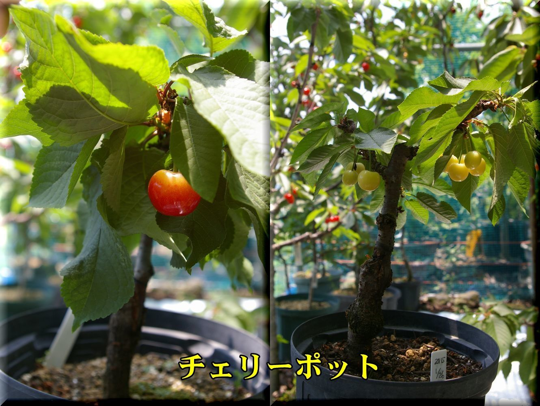 1CP170609_022.jpg