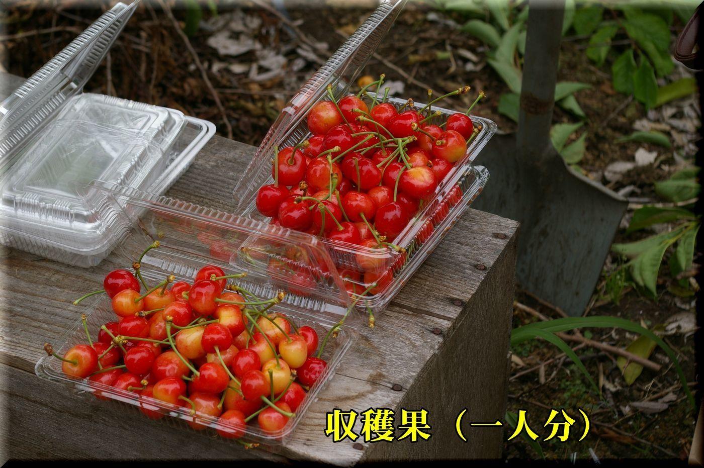 1DC170618_007.jpg