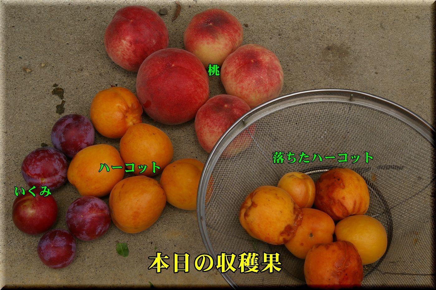 1DC170622_008.jpg