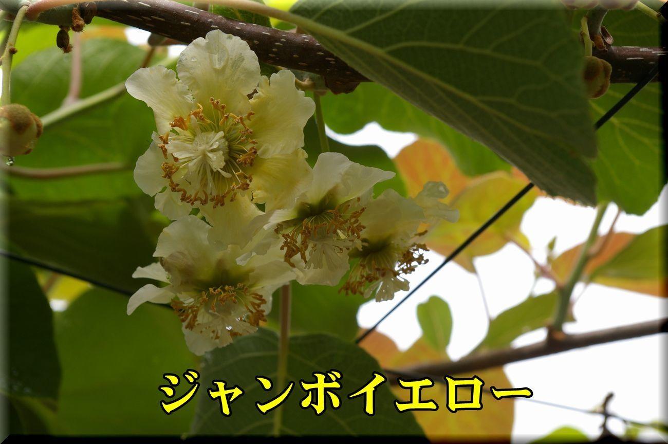 1JE170514_004.jpg