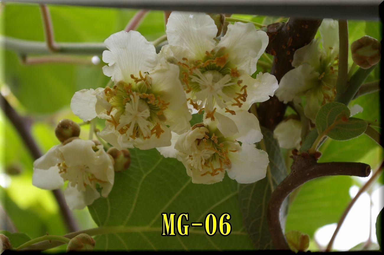 1MG170514_002.jpg