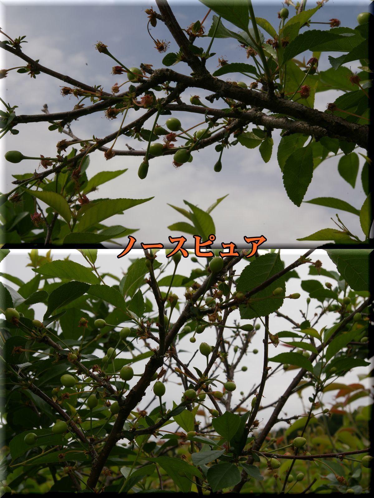 1Npyua170524_001.jpg