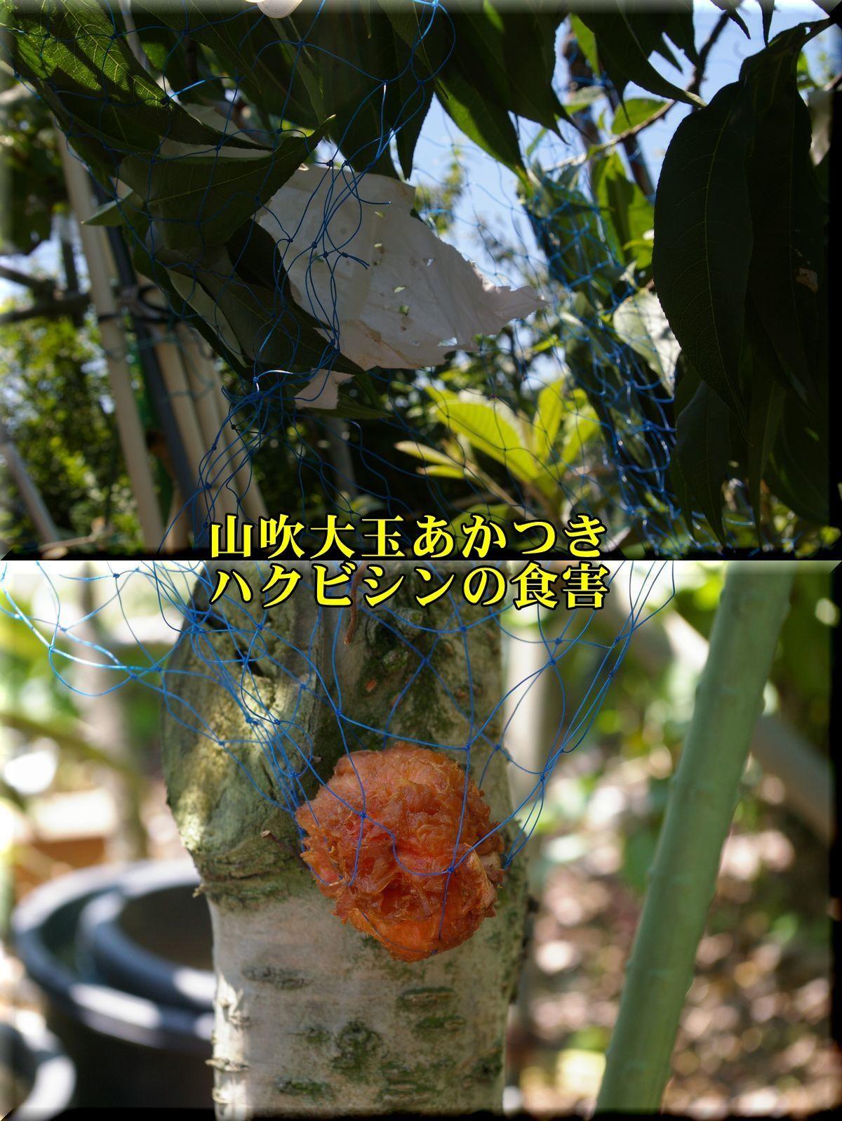 1YOakatuki170721_001.jpg