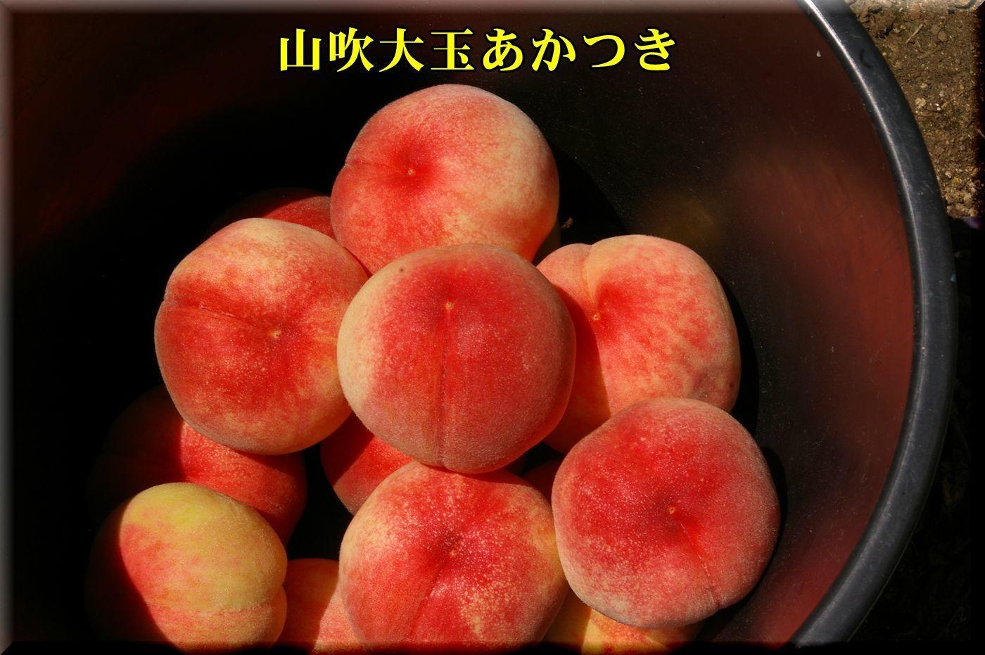 1YOakatuki170721_002.jpg