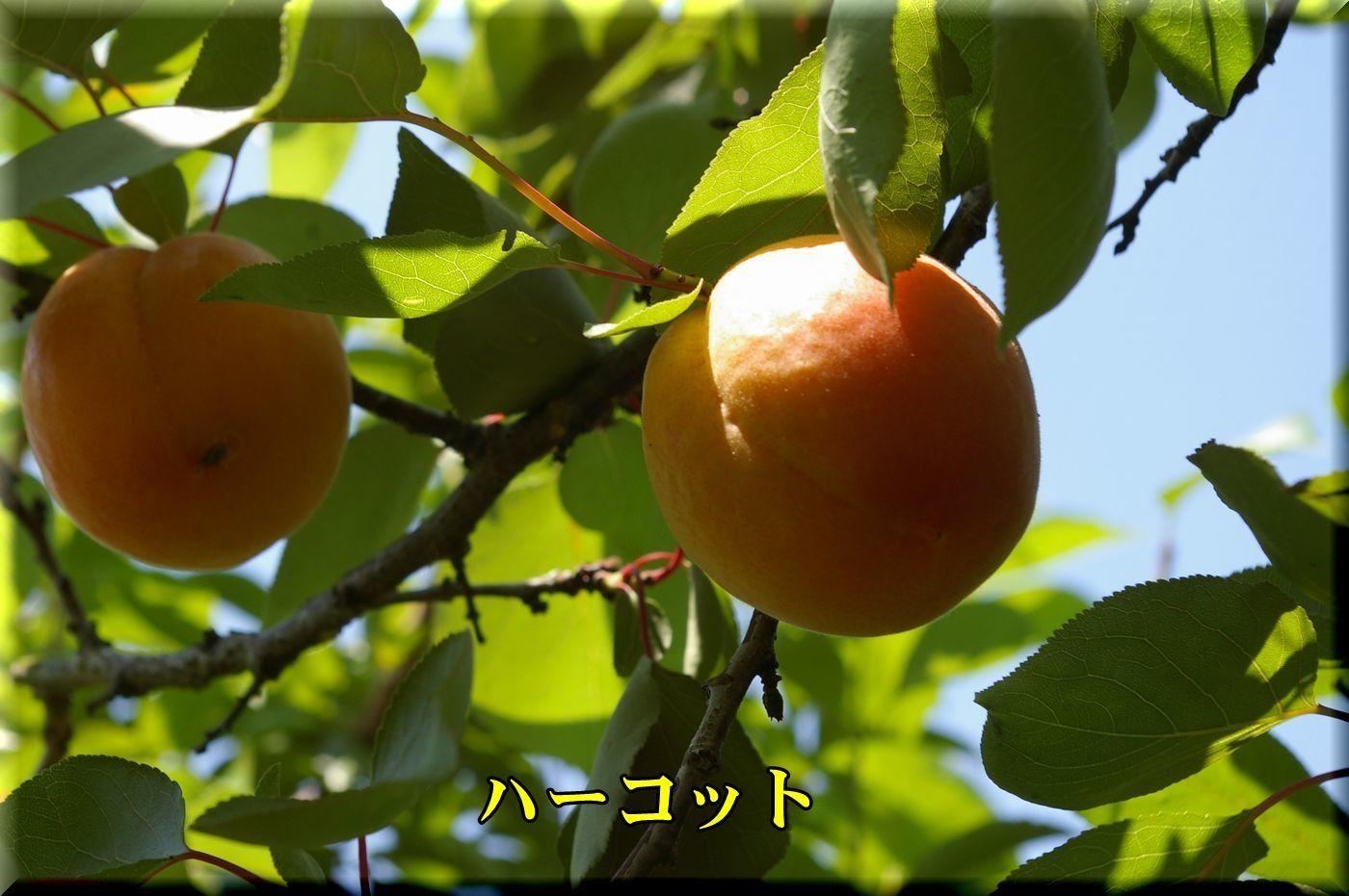 1harcot170619_003.jpg