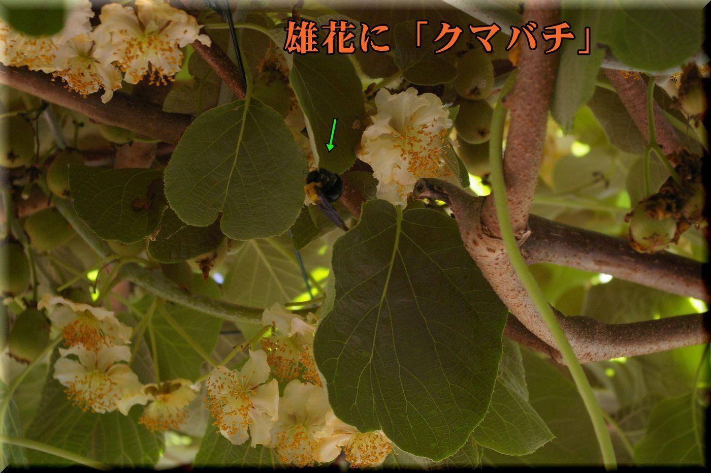 1kumabati170602_017.jpg