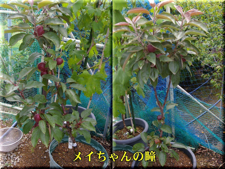 1meichan170612_001.jpg