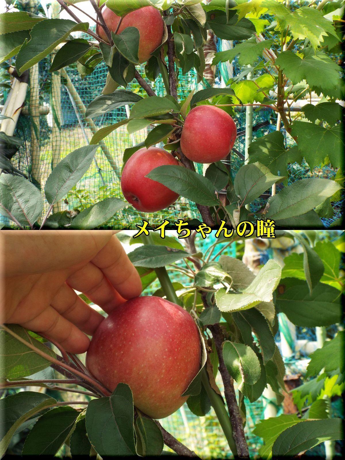 1meichan170821.jpg