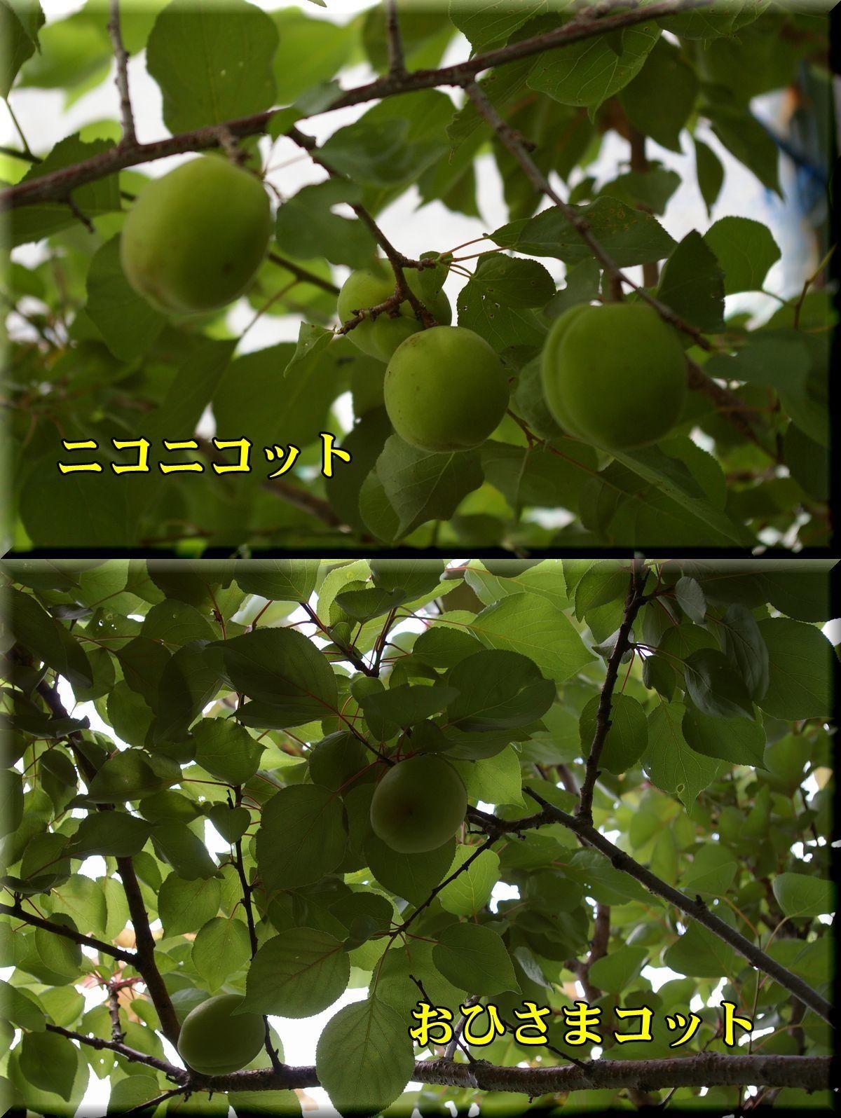 1nico_ohicot170612_016.jpg