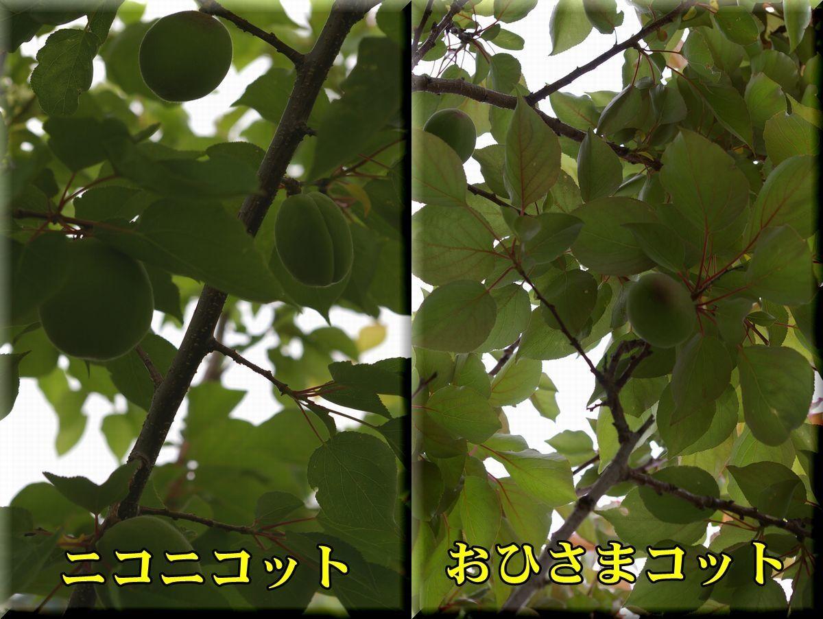 1nikoni_ohisama170509_025.jpg