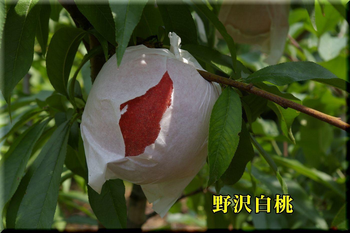 1nozawa170709_001.jpg