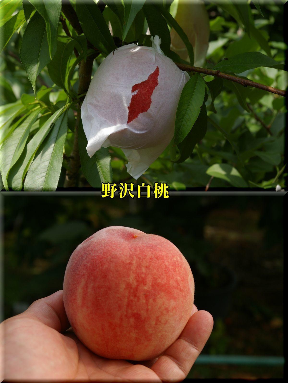 1nozawahakutou170703_001.jpg