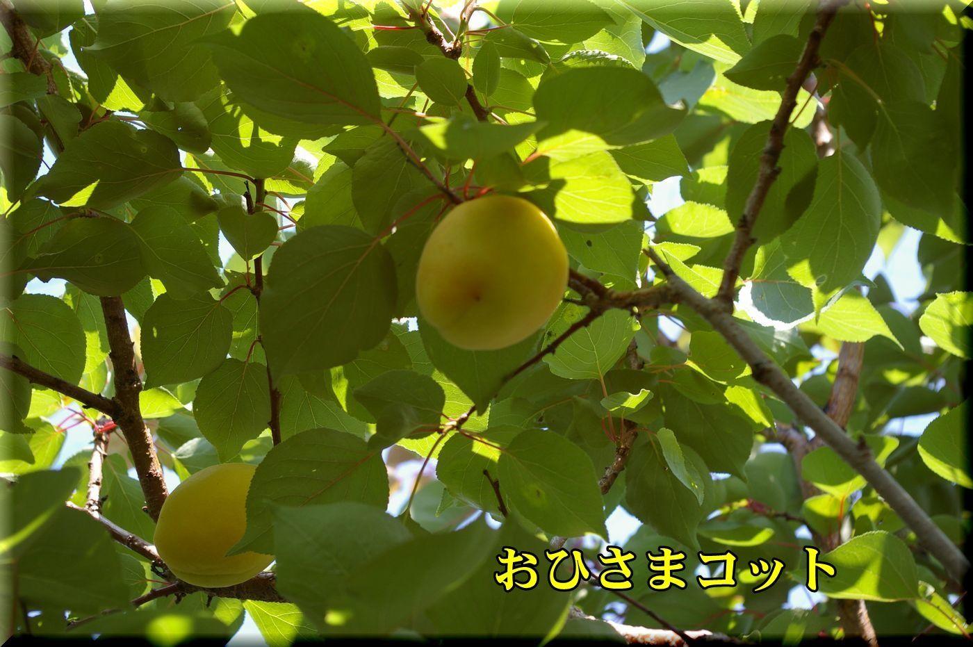 1ohisama170619_004.jpg