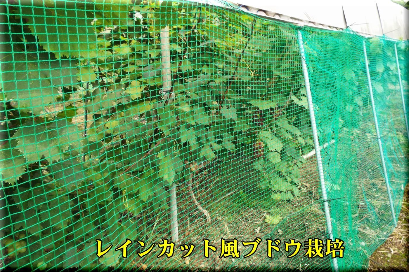 1raincut170819_019.jpg