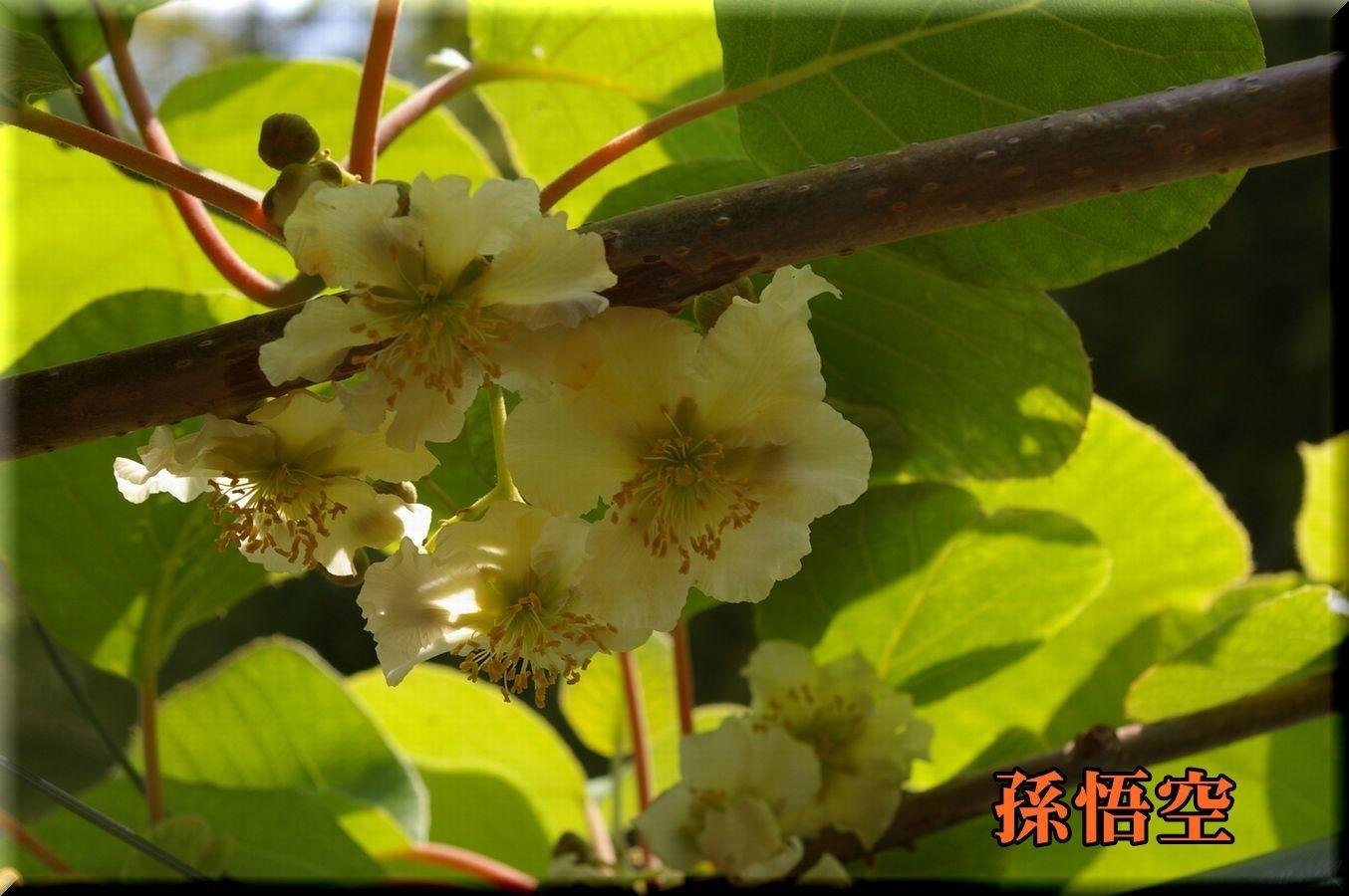 1songoku170518_010.jpg