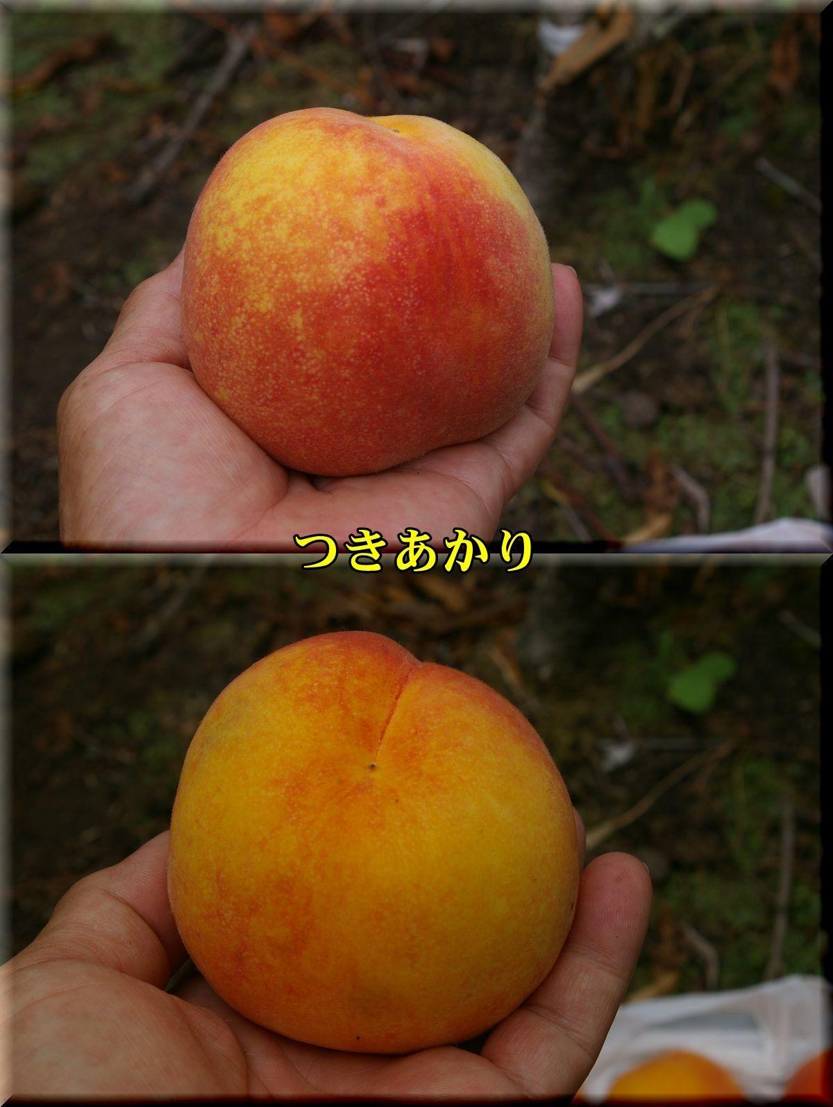 1tukiakari170722_004.jpg