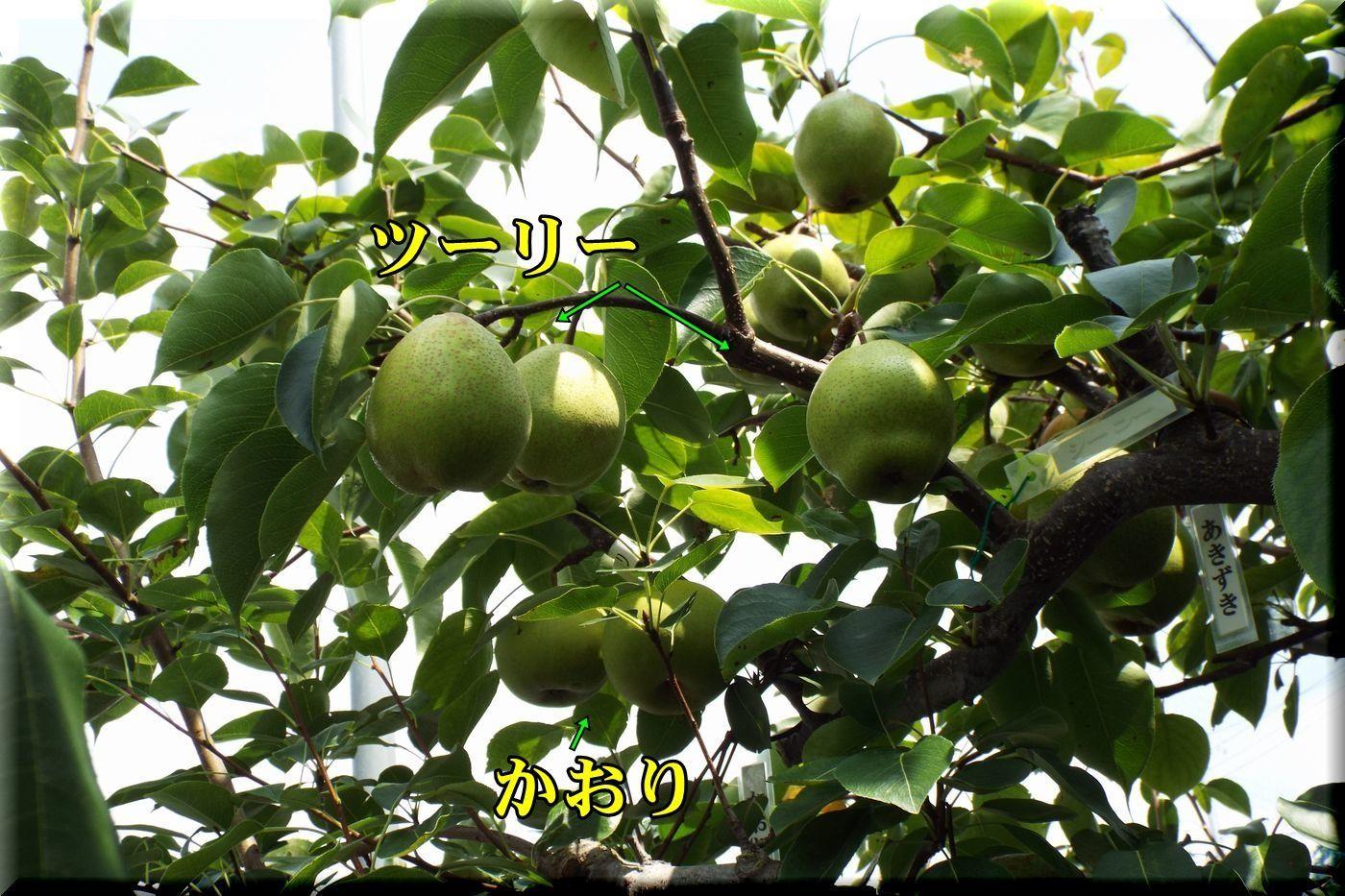 1turykaori170821_017.jpg
