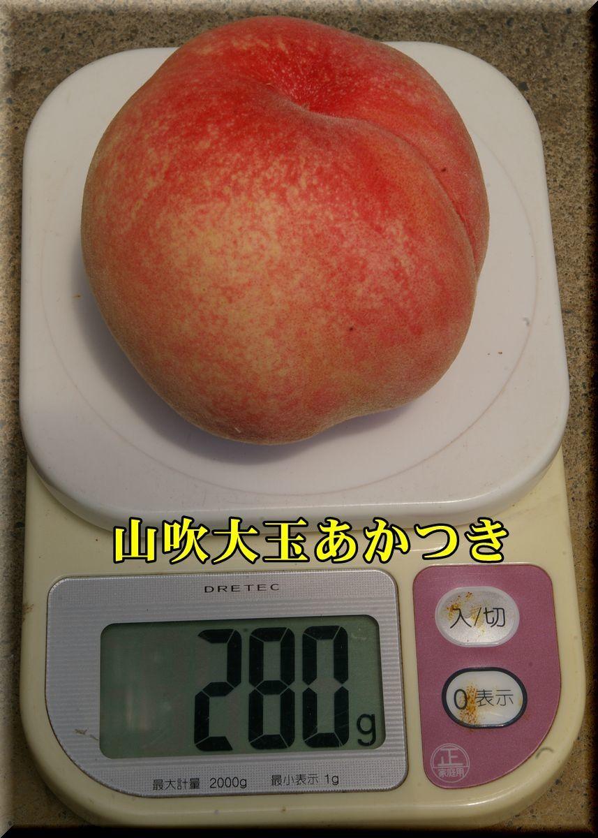1yamabukiOA170719_011.jpg