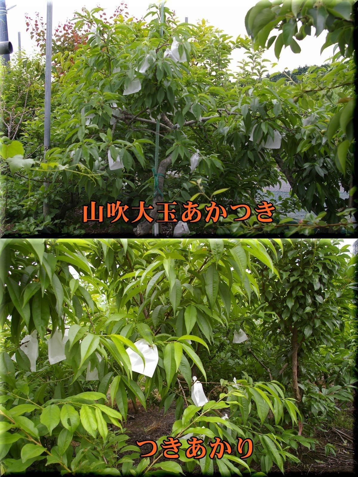 TUKIAKARI1YOA_tukiak170524_010.jpg