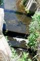 ヨシノボリの堰登り