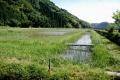 湿地 水路