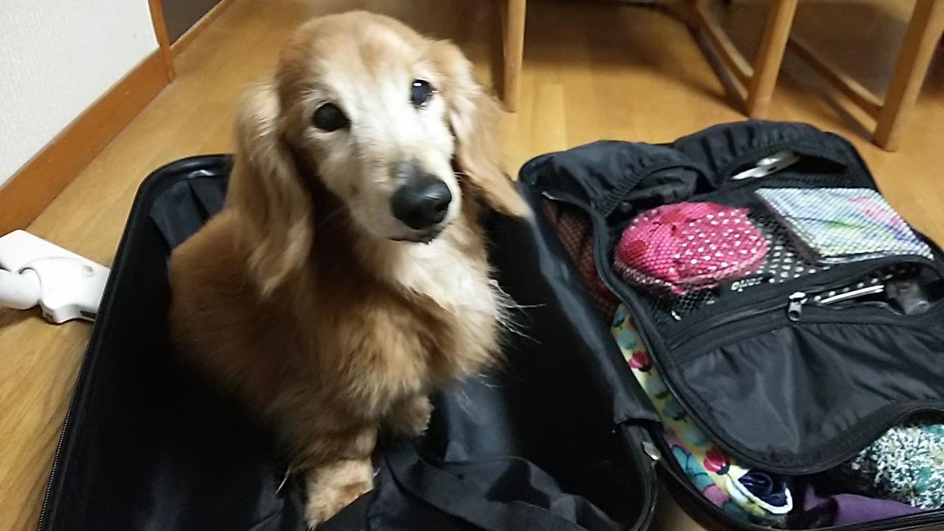 ウォンちゃんとスーツケース