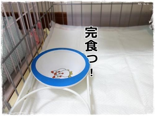DSC01770.jpg