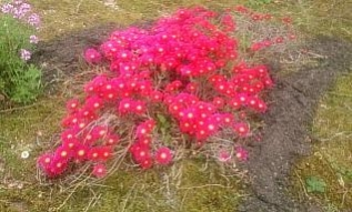 flowers@201705300001.jpg