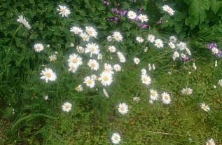 flowers@201706010001.jpg