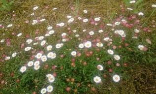 flowers@201706090001.jpg