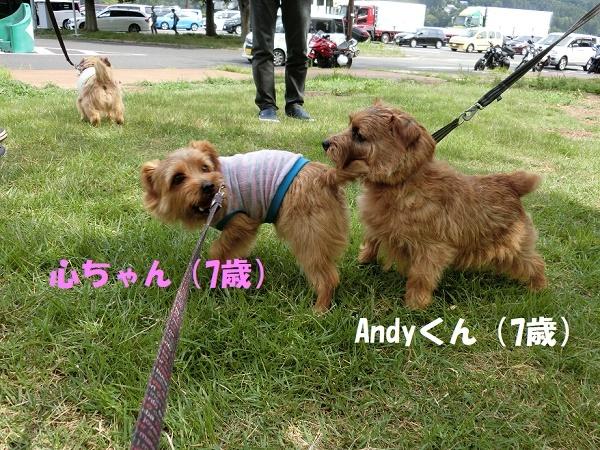 2017_0722_084553-CIMG4614a.jpg