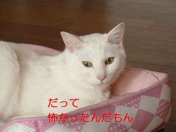P1350824.jpg