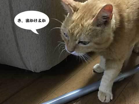 2017_07_26_2.jpg