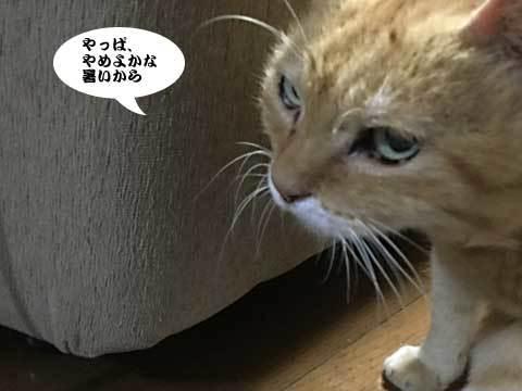 2017_07_26_3.jpg